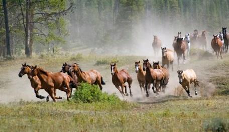 Fototapet med hästmotiv