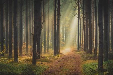 Fototapet med skogsmotiv